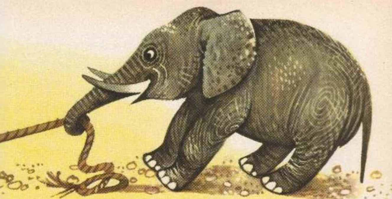 fabula la tortuga el hipopótamo y el elefante